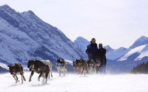 Howling Dog Sled Tours - their site.jpg